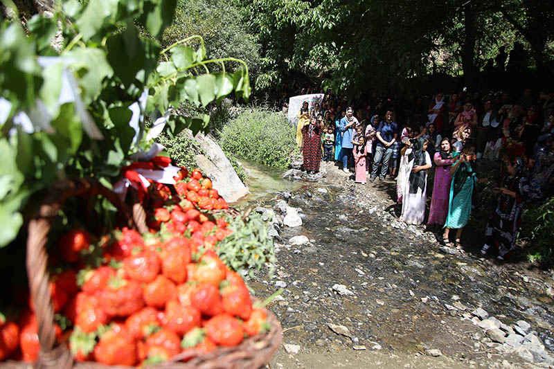 طعم شیرین شهروند افتخاری با توت فرنگی کردستان