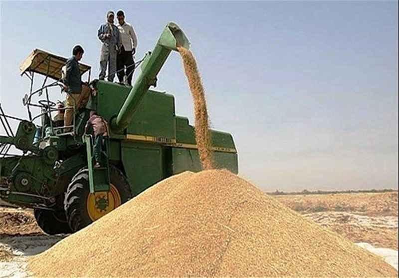 ۴۰ هزار محموله گندم در ایلام خریداری شد