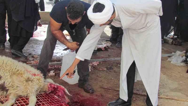 دام عید قربان را از مراکز مجاز عرضه احشام خریداری کنید