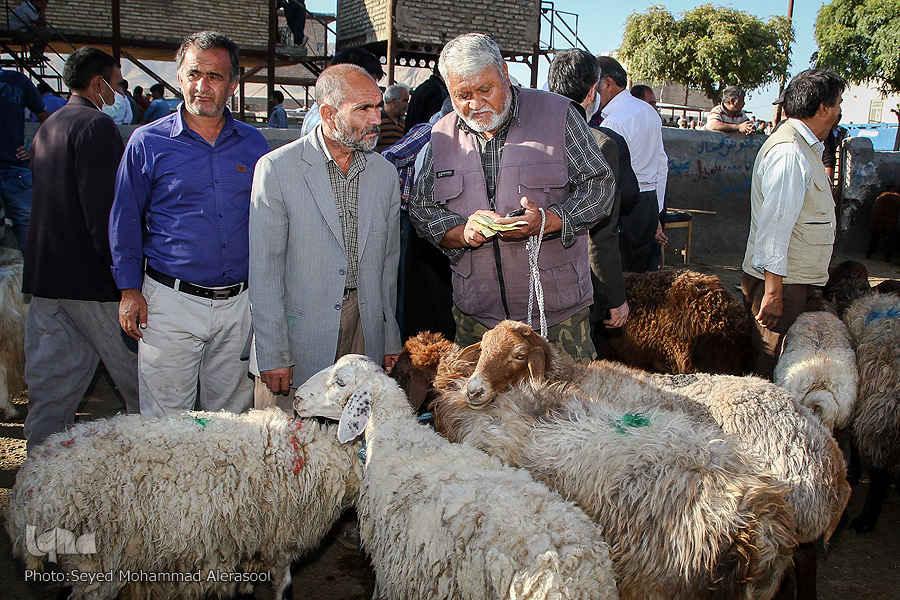 کنترل و نظارت بهداشتی و شرعی اکیپهای دامپزشکی بر دامهای قربانی در روز عید قربان