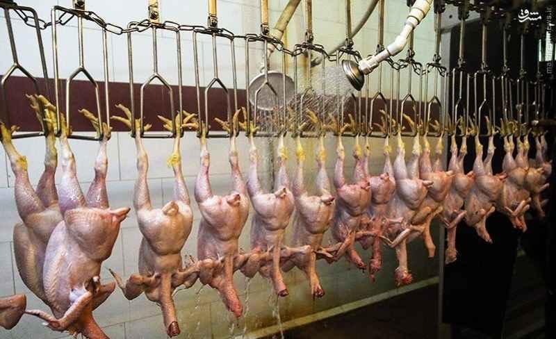 کشتارگاه مرغ ایلام به چرخه تولید باز می گردد