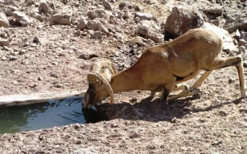 ۱۲۰ هزار لیتر آب در آبشخورهای حیات وحش ایلام توزیع می شود