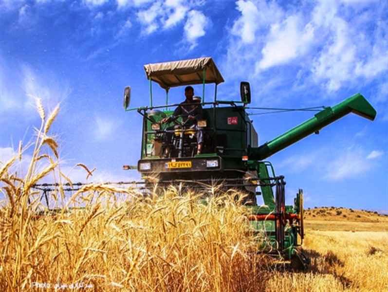 گندمکاران ایلامی ۲۰ درصد کمتر از پارسال محصول درو کردند