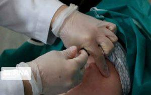 فرماندار:  ۸۸ درصد جمعیت بدره واکسن کرونا تزریق کردند